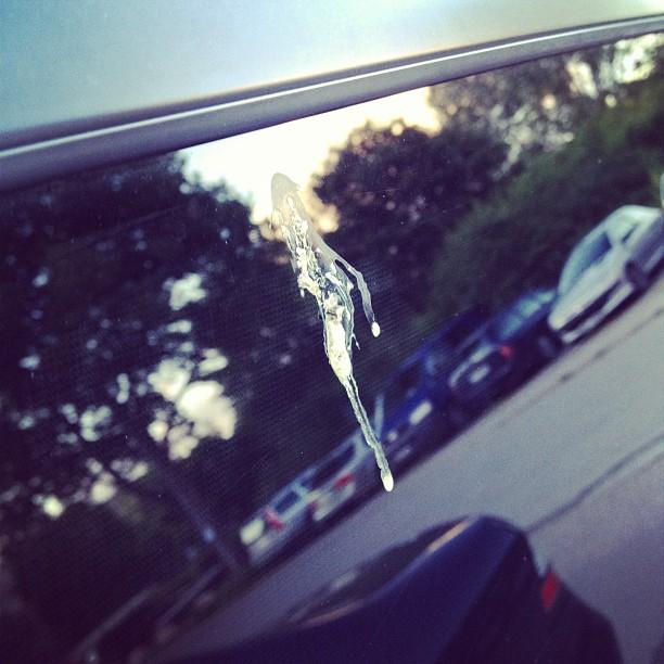 Har precis tvättat bilen. Vad händer! Fågelskit!!!