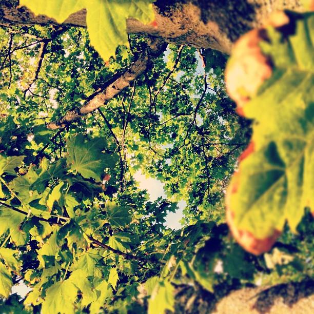 Hösten naggar i kanten på sommaren.