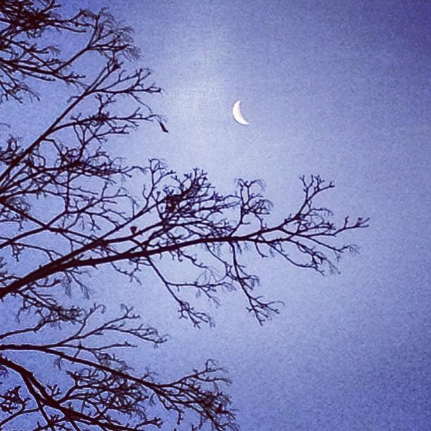 Godmorgon! Let's moon!