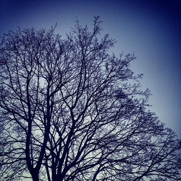 Höstträd.